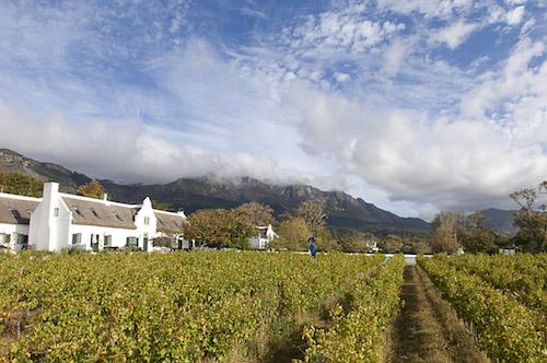 South Africa, Cape Town area, Constantia Wine Route, Steenberg Wine Estate