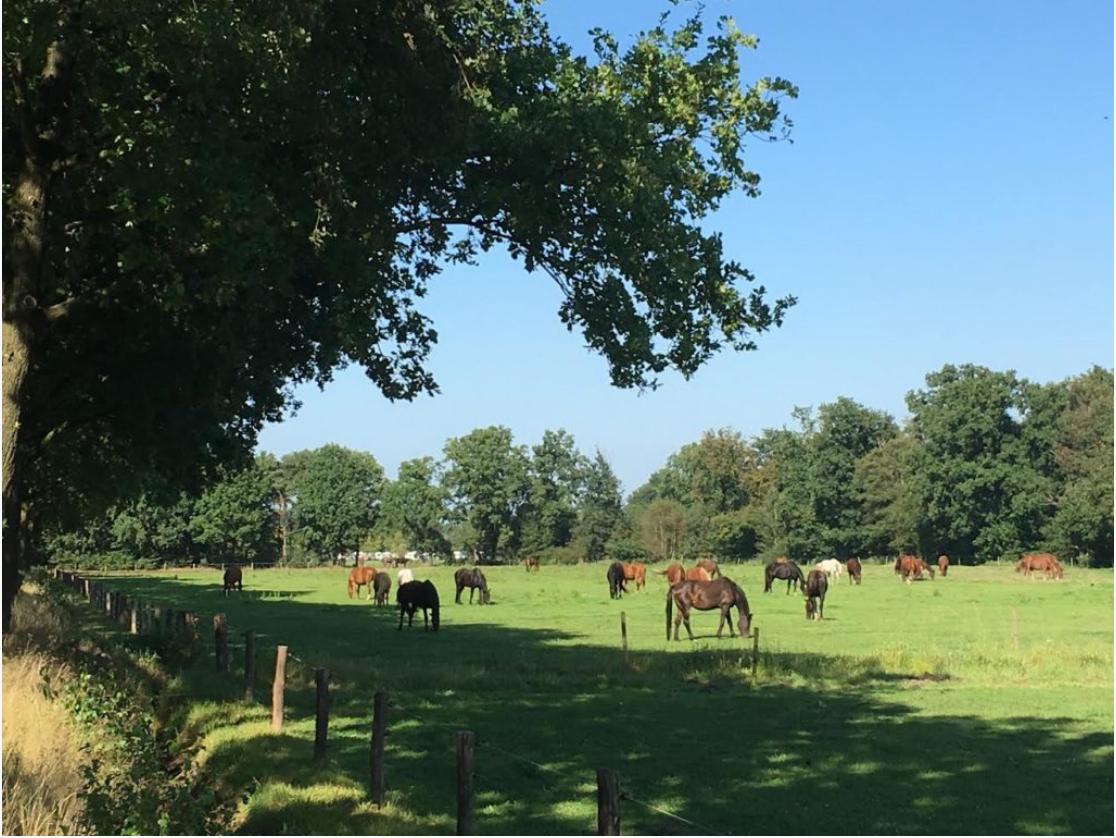 Horse farm in Leenderstrijp, Eindhoven best neighborhoods.